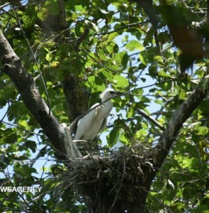 Mehr News Agency - Birds nesting and laying eggs in Estil Lagoon