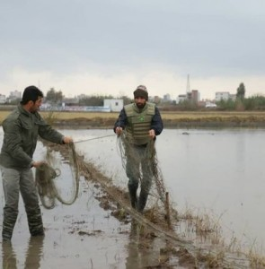 Illegal bird traps identified, destroyed in northern Iran