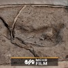 VIDEO: 15k-year-old human footprint found in Chile