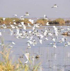 Kani Barazan international wetland overflows after a decade