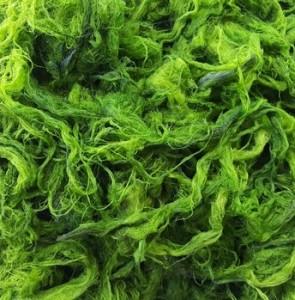 Incredible algae potentials - Mehr News Agency