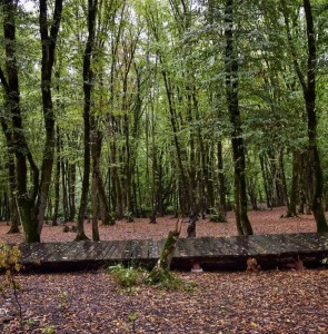 Annual budget for forest protection doubles