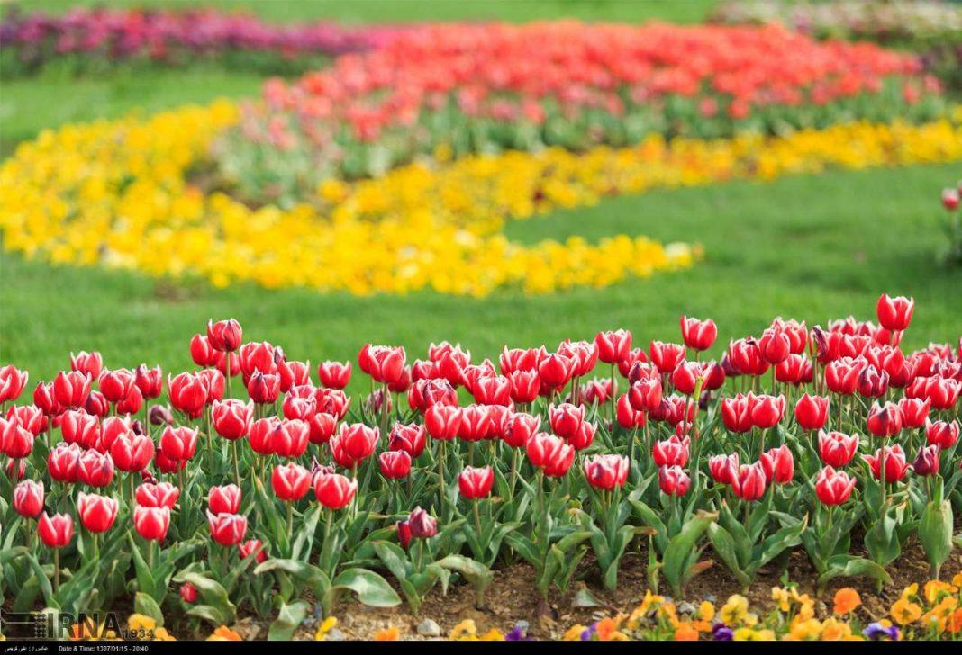Tulips Festival Underway in Iran's Markazi Province